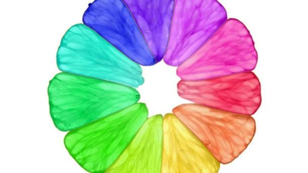 doğal renk maddesi