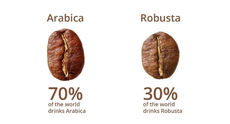 kahve arabica- robusta